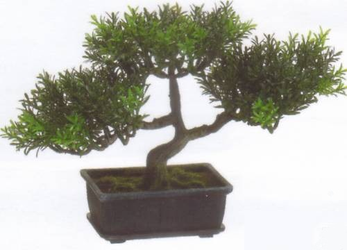 7639  9in tea leaf bonsai