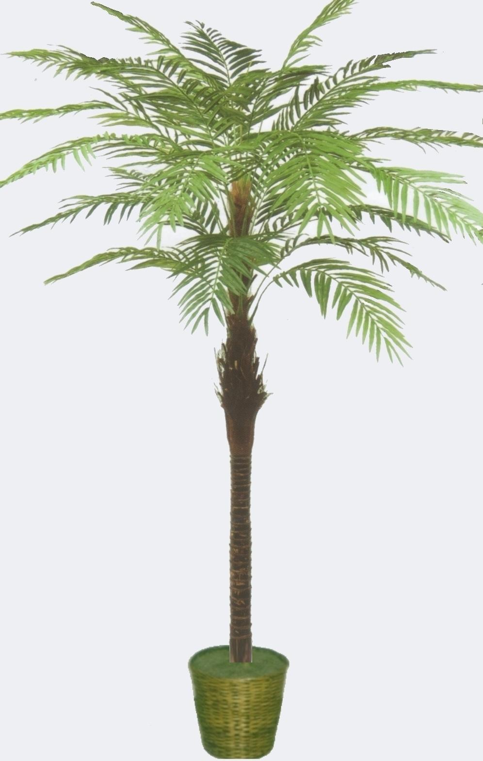 Fishtail palm tree dieffenbachia palm tree monstera sugarcane palm dracaena - Real areca palm ...