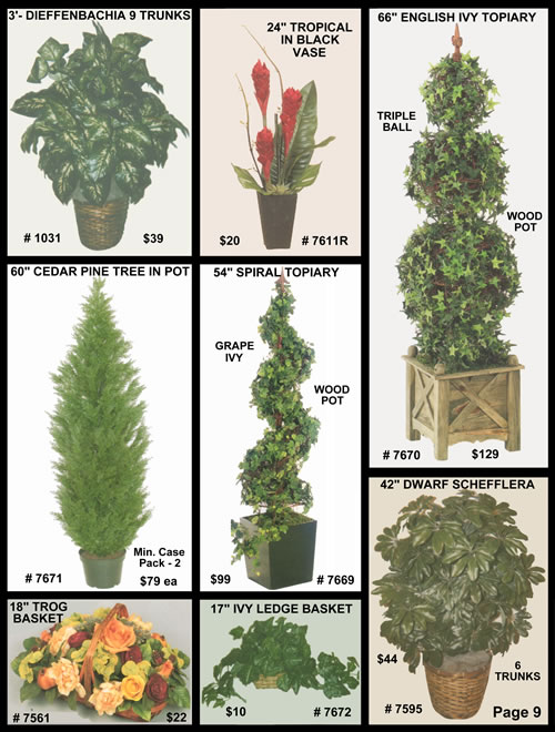 dieffenbachia, tropical flowers, english ivy, cedar pine tree, Natural flower