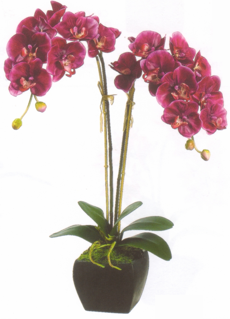 7626 orchid in urn